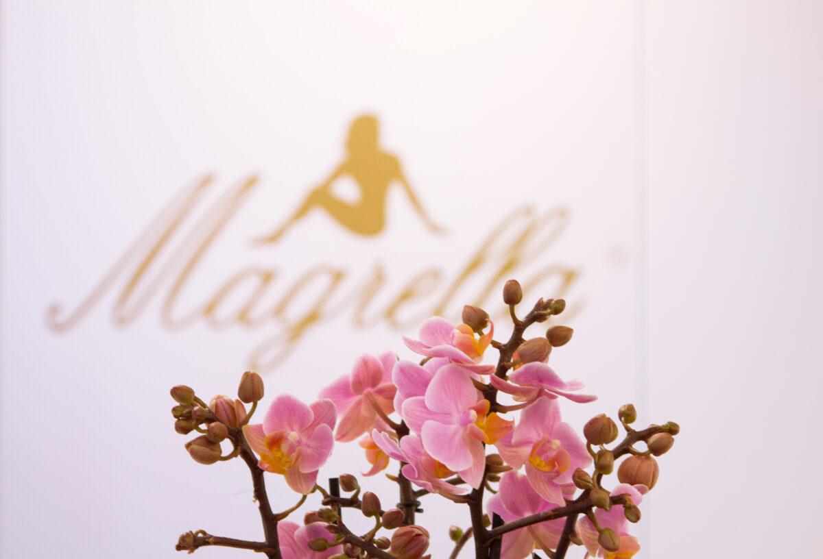 logo orchidea Magrella Ferrara centro dimagrimento clinica per dimagrire dieta facile veloce perdere peso